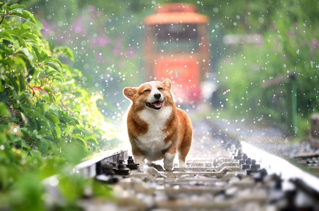 happydoginrain